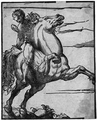 reiter mit sich aufbäumendem pferd (after pordenone) by niccolo boldrini
