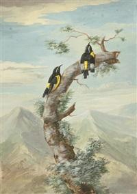 zwei exotische vögel vor einer weiten landschaft by aert schouman