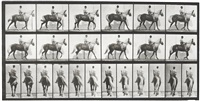 animal locomotion, plate 653 by eadweard muybridge