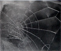 spider web by vija celmins