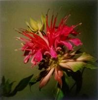 untitled (flower) by nobuyoshi araki