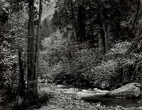 tenaya creek, dogwood rain, yosemite national park by ansel adams