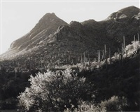 mountain and saguaro cactus by ansel adams