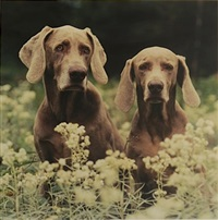 couple by william wegman