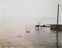 egret and heron, salton sea by richard misrach