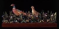 pheasants by james grashow