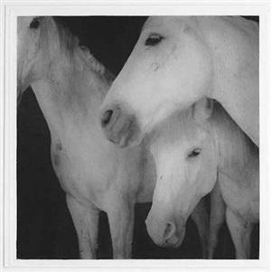 caballos blancos by keith carter