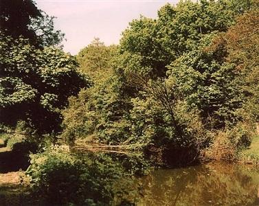 painting austen, billingham, breakwell, core, farquhar, golub, graham, mangelos, mansfield, miller, toren by richard billingham