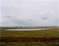 untitled, norfolk (pond) by richard billingham