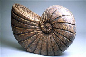 spiral shell by chris berti
