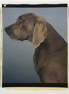 twinly by william wegman