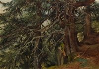 sapins près du grand eiger by alexandre calame