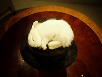 top view: rabbit on floating top hat - <i>sold</i> by polly morgan