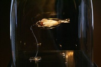 goldfinch - <i>sold</i> by polly morgan
