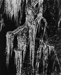 icicles by brett weston