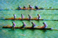 coxless fours by harry gruyaert