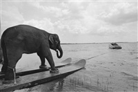 a stunt elephant, honky tonk freeway, sarasota, florida by mary ellen mark