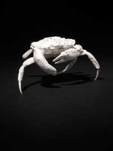 finger crab by dorothy cross