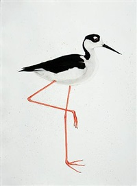 black-necked stilt by scott kelley