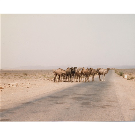camels by gary indiana