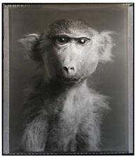 monkey (