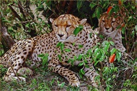 always alert by tony karpinski