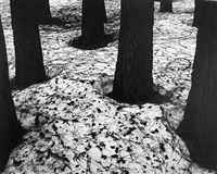 pines in snow, yosemite by brett weston