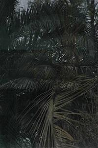 jungle b08 by eberhard havekost