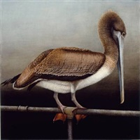brown pelican by mari kloeppel