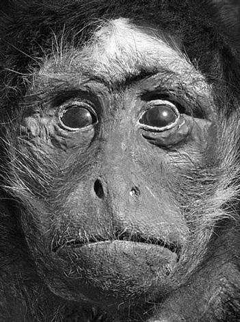 dead monkeys by oleg kulik