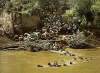 the great migration by tony karpinski