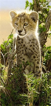 cheetah cub in a tree by tony karpinski