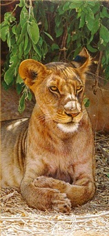 regal cat by tony karpinski