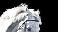 horse #8248 by bob tabor