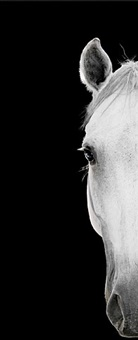 horse #26 by bob tabor