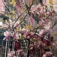new york in spring by jack pierson