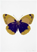 the souls ii – imperial purple/oriental gold/hazy cold by damien hirst