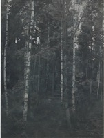 birchwood 1 by paul winstanley