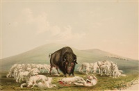 north american indian portfolio, buffalo hunt, white wolves attacking a buffalo bull (plate 10) by george catlin