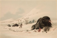 north american indian portfolio dying, buffalo bull, in snow drift (plate 17) by george catlin
