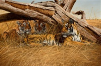 tigers at rest by gary r. swanson