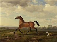 an arab thoroughbred at schloss blutenburg by albrecht adam
