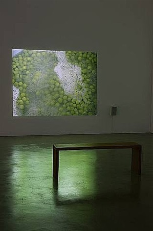 peas by wolfgang tillmans