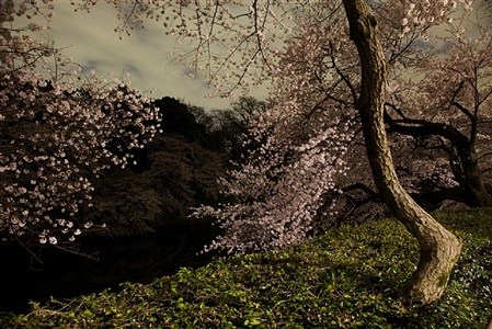 gallery 1 ori gersht, still and forever by ori gersht