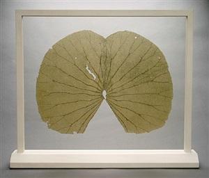 lotus leaves (the full leaves) by gabriel orozco