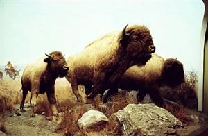buffalo, 2009-2011 by tobias zielony