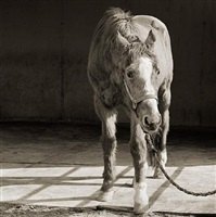 handsome one, thoroughbred horse, age 33 by isa leshko