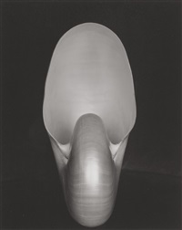 shell #15 by edward weston
