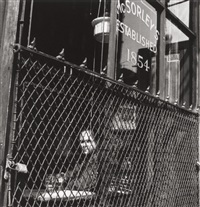 mcsorley's old ale house by berenice abbott