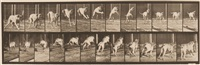 dread, jumping hurdle by eadweard muybridge